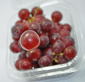 Grape floating up from retail package. A red grape floating up from retail package Royalty Free Stock Image