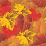 Grape foliage background Stock Image