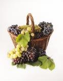 Grape. Is fondamental to make a good glass of wine Stock Photo