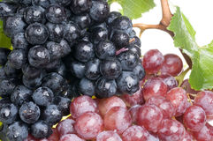 Grape food over white Stock Images