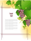 Grape frame Royalty Free Stock Photography