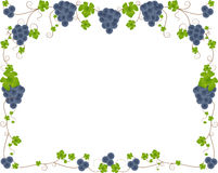 Grape frame stock image