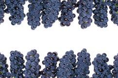 Grape frame Royalty Free Stock Image