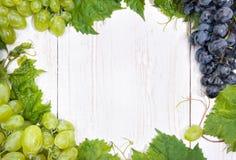Grape. Frame. Stock Images