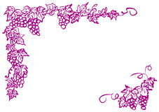 Grape frame. hand drawn illustration. Stock Photos