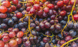 Grape. Fresh purple grape with good condition for health Stock Photography