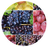 Grape fruit Royalty Free Stock Photography