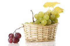 Grape in gab isolated Royalty Free Stock Image