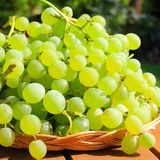 Grape Royalty Free Stock Photo