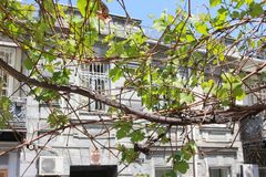 Grape on Georgian`s street royalty free stock photos