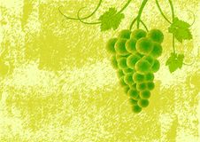 Grape on green background Stock Images