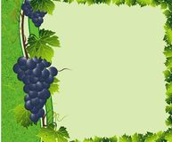 grape green border Stock Photography
