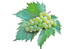 Grape on green sheet Royalty Free Stock Images