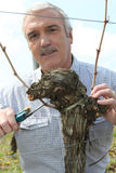Grape grower cutting a branch royalty free stock images