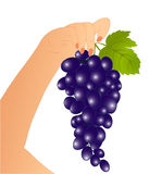 Grape in a hand Royalty Free Stock Image