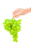 Grape in the hand Royalty Free Stock Images