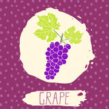 Grape hand drawn sketched fruit with leaf on background with dots pattern. Doodle vector grape for logo, label, brand identity Royalty Free Stock Photos
