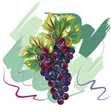 Grape Handdrawn. Grape in handdrawn style like oil painting or watercolor Royalty Free Stock Images