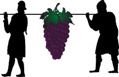 Grape harvest. Vector silhouettes of two men with grape Stock Images