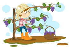 Grape harvest. Digital illustration about a cute teen girl cutting grapes from a vine during the harvest at the end of september Royalty Free Stock Image