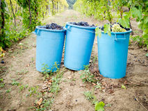 Grape harvest. Grapes containers in the field during the harvest Royalty Free Stock Image
