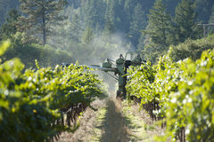 Grape harvest in California wine country. A machine harvester picking grapes in California's famed wine country Royalty Free Stock Photos