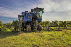 The grape harvest combine , Grape harvesting machine, combine-harvester Tuscany, Italy Stock Photos
