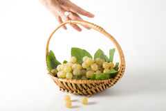 Grape for harvest Stock Images