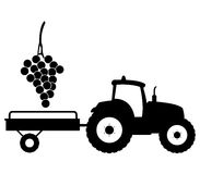 Grape harvest illustrated Royalty Free Stock Photo