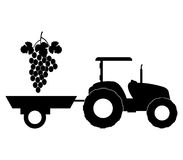 Grape harvest illustrated. On a white background Stock Photo