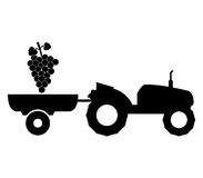 Grape harvest illustrated. On a white background Stock Photos