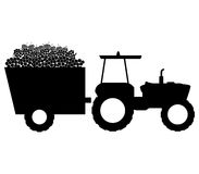 Grape harvest illustrated. On a white background Royalty Free Stock Photos