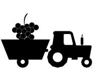 Grape harvest illustrated. On a white background Royalty Free Stock Photo
