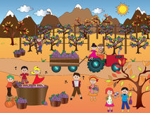 Grape harvest. Illustration of grape harvest with happy people Royalty Free Stock Image