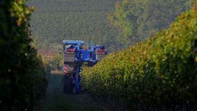 Grape Harvest Machine - Bordeaux Vineyard stock video