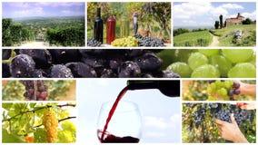 Grape harvest montage stock footage