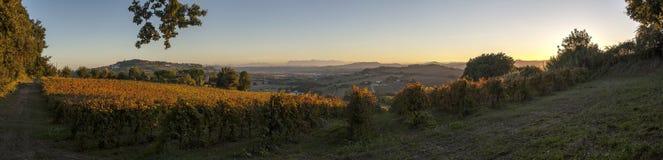 Grape harvest time. Near mount Conero, Italy Stock Photos
