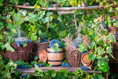 Grape harvest in a village in old fashioned style Stock Photo