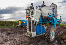 Grape Harvester II Royalty Free Stock Photography
