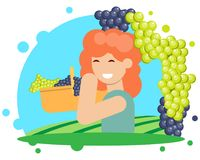 The grape harvesting Stock Image