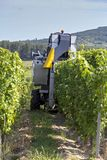 Grape harvesting machine working in autumn Stock Photography