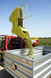 Grape harvesting machinery. Harvesting machinery in vineyard pouring grapes into metal container Royalty Free Stock Photography