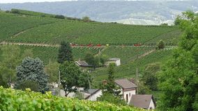 Grape harvests to Épernay in France. Royalty Free Stock Photography