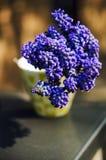 Grape hyacinths Stock Photos