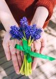Grape hyacinths bouquet Royalty Free Stock Photo