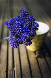 Grape hyacinths in a vase Stock Images