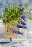 Grape hyacinths in a vase Stock Photo