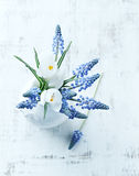 Grape hyacinths and white crocus flowers in a vase Royalty Free Stock Photography