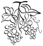 Grape illustration Royalty Free Stock Image