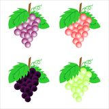 Grape illustration Royalty Free Stock Photo
